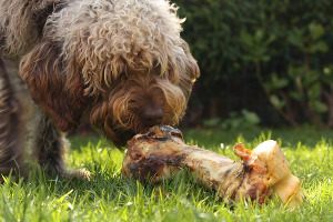 The Myths About High Protein In Your Dog's Diet
