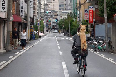 Dog on the bicycle